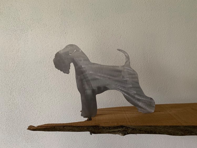 Softcoated weather terrier