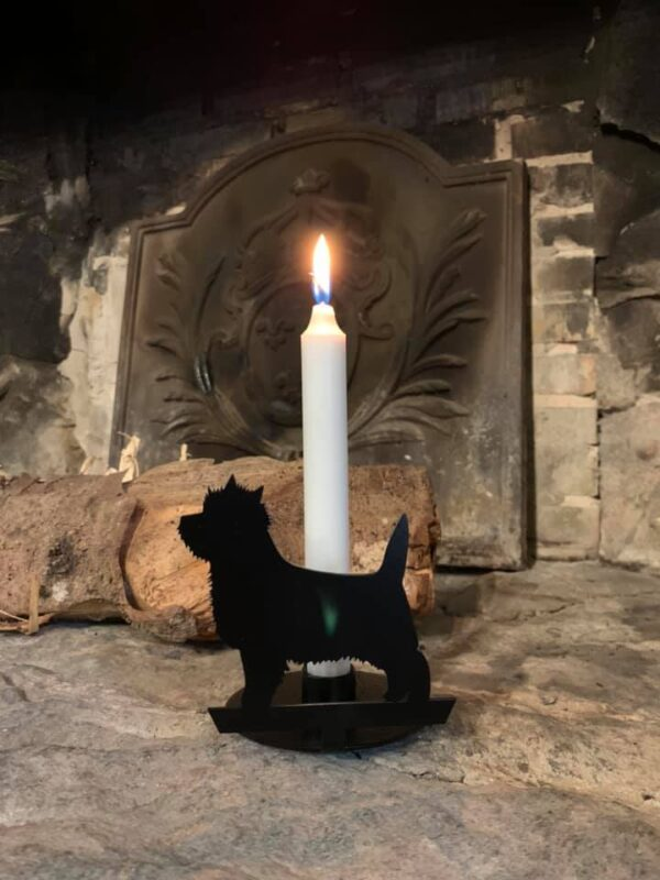 Kammer stage Cairn terrier