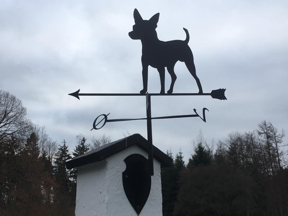 Tjekkisk rottehund